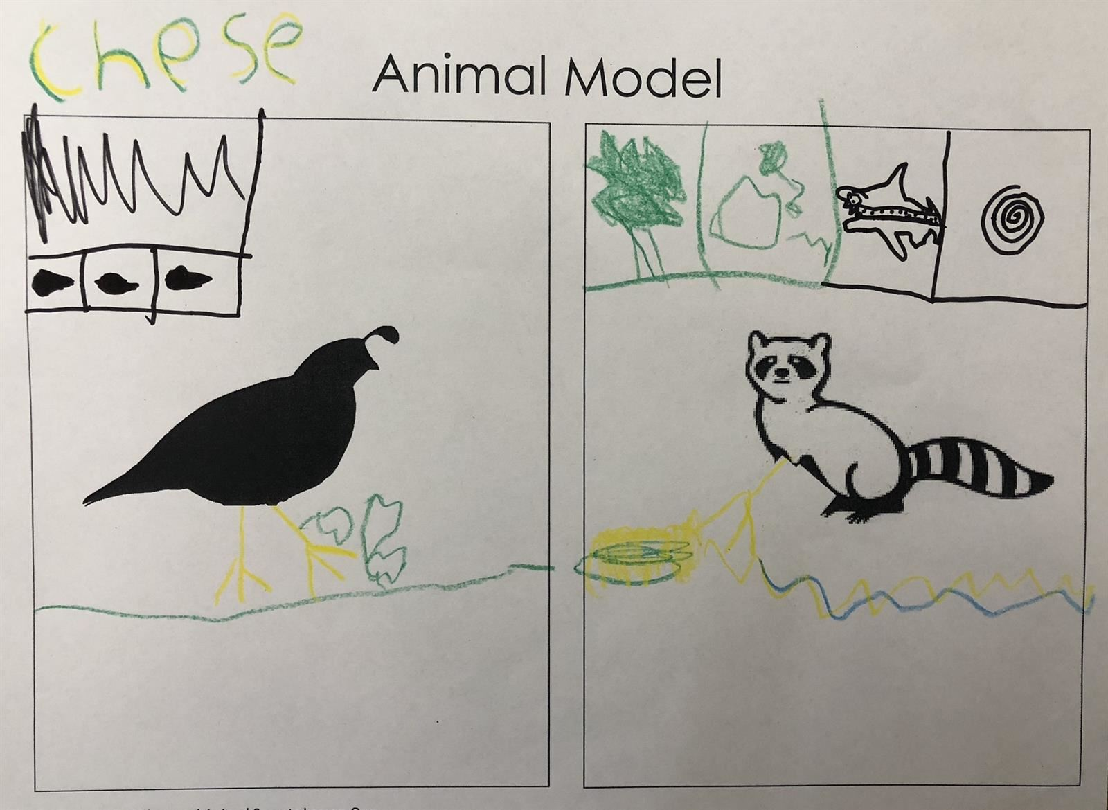 Model of Animals and Their Food Sources